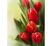 Алмазная вышивка Тюльпаны - вестники весны 25 х 20 см (арт. FR454)