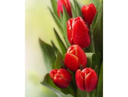 Купить Алмазная вышивка Тюльпаны - вестники весны 25 х 20 см (арт. FR454)