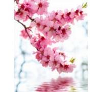 Алмазная вышивка Ветка сакуры весной 25*20 см (арт. FS123)