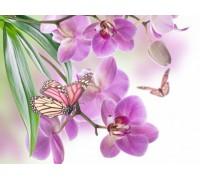 Алмазная вышивка Нежная орхидея 20*30 см (арт. FS133)