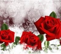 Алмазная вышивка Розы для тебя 30 х 25 см (арт. FS245)