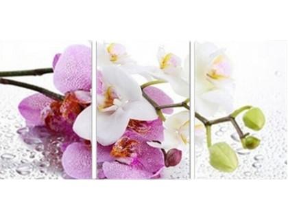 Купить Набор алмазной вышивки Орхидея. Триптих (три картины). 75 х 35 см (арт. FS312)