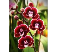 Набор для творчества алмазная мозаика Бархатная орхидея 40 х 30 см (арт. FS586)