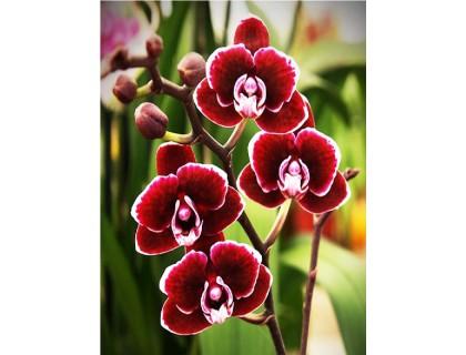 Купить Набор для творчества алмазная мозаика Бархатная орхидея 40 х 30 см (арт. FS586)