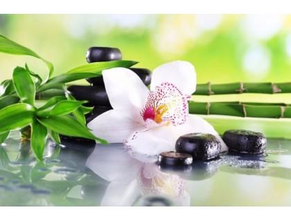 Купить Алмазная вышивка Орхидея с бамбуком  50*30 см (арт. FS657)