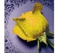 Комплект алмазной вышивки Желтая роза 22 х 22 см (арт. PR061) частичная выкладка