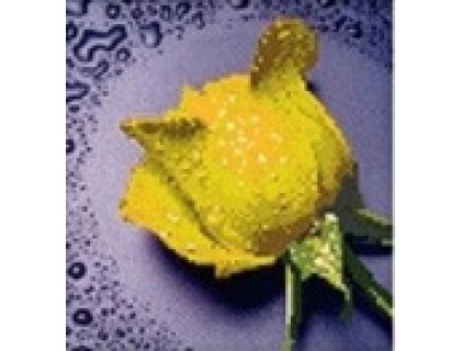 Купить Комплект алмазной вышивки Желтая роза 22 х 22 см (арт. PR061) частичная выкладка