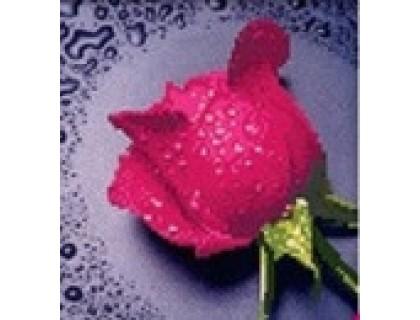 Купить Набор алмазной вышивки Розовая роза 22 х 22 см (арт. PR062) частичная выкладка
