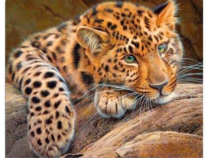 Купить Набор алмазной вышивки на подрамнике Леопард отдыхает 50 х 40 см (арт. TN559)