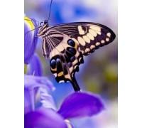 Алмазная вышивка Нежная бабочка 20 х 25 см (арт. FS180)