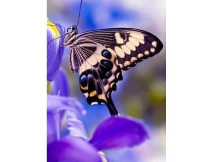 Купить Алмазная вышивка Нежная бабочка 20 х 25 см (арт. FS180)