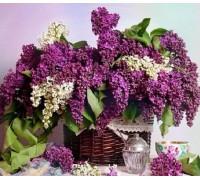 Алмазная вышивка Цветы сирени 30 х 30 см (арт. FS356)