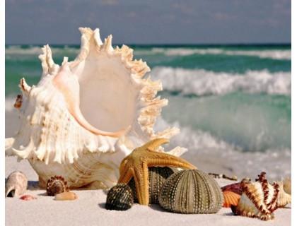 Купить Комплект алмазной вышивки Ракушки у моря 30 х 40 см (арт. FS280)