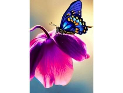 Купить Алмазная вышивка 30 х 20 см на подрамнике Бабочка на цветке (арт. TN044)