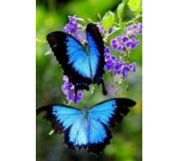 Алмазная вышивка 30 х 20 см на подрамнике Взмах крыльев бабочки (арт. TN046)