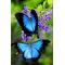 Купить Алмазная вышивка 30 х 20 см на подрамнике Взмах крыльев бабочки (арт. TN046)