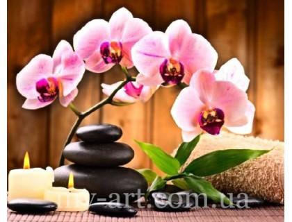 Купить Алмазная вышивка на подрамнике 50 х 40 см Орхидея по феншую (арт. TN1025)