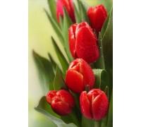 Алмазная вышивка 30 х 20 см на подрамнике Тюльпаны для самого родного человека (арт. TN454)
