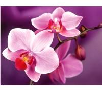 DIY Набор для алмазной вышивки на подрамнике 40 х 50 см Нежные орхидеи (арт. TN934)