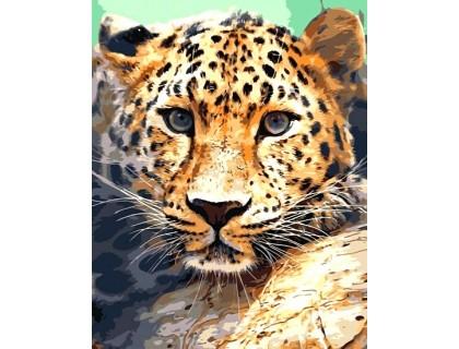 Купить Алмазная вышивка на подрамнике 40 х 50 см Взгляд леопарда (арт. TN947)
