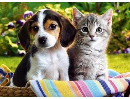 Купить Алмазная вышивка Щенок и котенок 30 х 40 см (арт. FR544)