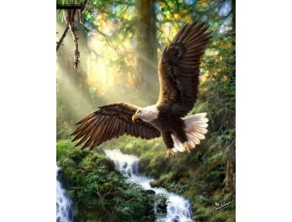 Купить Алмазна вишивка Дикий птаха 50 х 40 см (арт. FR682)