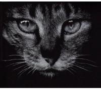 Алмазна вишивка Дика кішка 40 х 40 см (арт. FR690) круглі стрази