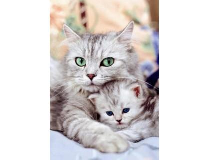 Купить Набор алмазной вышивки Кошка с котенком 30 х 40 см (арт. FS037)
