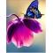 Купить Алмазная вышивка Бабочка на цветке 20 х 26 см (арт. FS044)