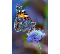 Алмазная вышивка Яркая бабочка на цветке 20 х 25 см (арт. FS045)