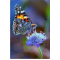 Купить Алмазная вышивка Яркая бабочка на цветке 20 х 25 см (арт. FS045)