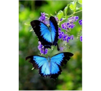 Алмазная вышивка Две бабочки-парусник 20 х 25 см (арт. FS046)
