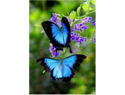 Купить Алмазная вышивка Две бабочки-парусник 20 х 25 см (арт. FS046)