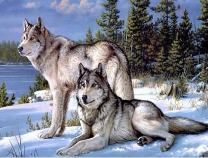 Купить Алмазная вышивка без коробки MyArt Зимние волки 40 х 50 см (арт. MA459)