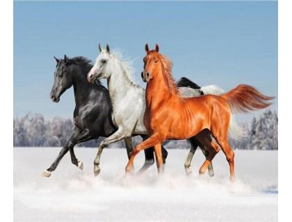 Купить Алмазная вышивка Тройка лошадей 30 х 25 см (арт. FS086)