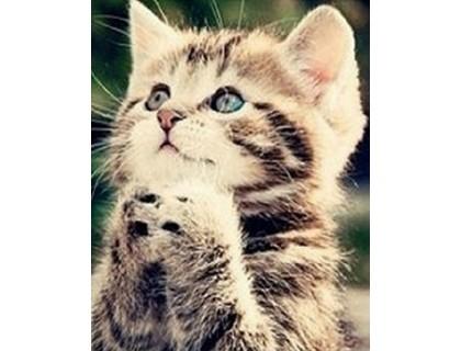 Купить Алмазная вышивка Маленький котенок KLN 20*25 см (арт. FS125)