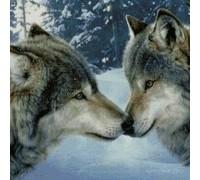 Алмазная вышивка Чувства волков 30 х 40 см (арт. FS252) волки