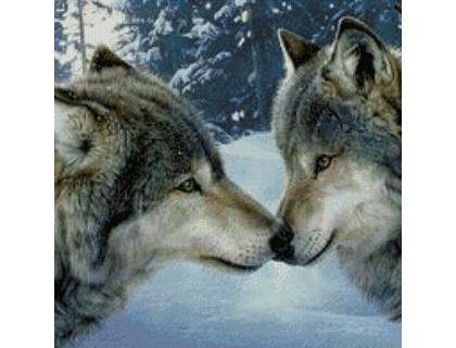 Купить Алмазная вышивка Чувства волков 30 х 40 см (арт. FS252) волки