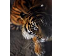 Алмазная вышивка Преданный тигр 30 х 40 см (арт. FS256)