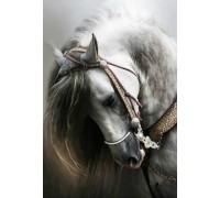 Алмазная вышивка Белый конь 30 х 40 см (арт. FS286)