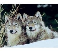 Алмазная вышивка Пара волков 31 х 40 см (арт. FS287)