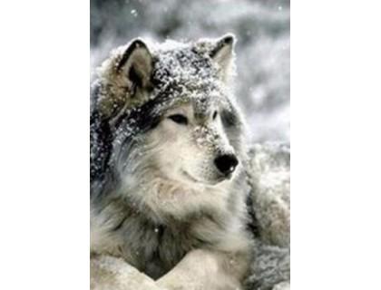 Купить Набор алмазной вышивки Волк в снегу 30 х 40 см (арт. FS333)