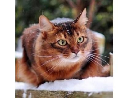 Купить Алмазная мозаика Котик в снегу 30 х 30 см (арт. FS389)