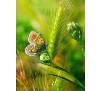 Алмазная мозаика Бабочка на колоске 20 х 25 см (арт. FS447)