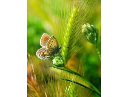 Купить Алмазная мозаика Бабочка на колоске 20 х 26 см (арт. FS447)