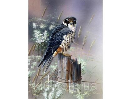 Купить Алмазная вышивка квадратные камни Зоркая птица 40 х 50 см  (арт. FS757)