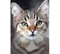 Алмазная вышивка Взгляд котенка 30 х 40 см (арт.FR781 )