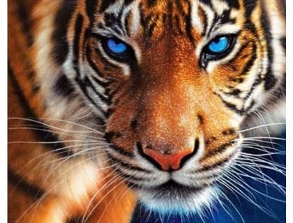 Купить DIY Алмазная мозаика 40 х 50 см на подрамнике Сила тигра (арт. TN137)