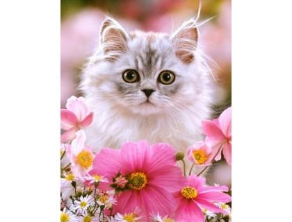 Купить Алмазная вышивка 50 х 40 см на деревянном подрамнике Пушистый котенок (арт. TN482)