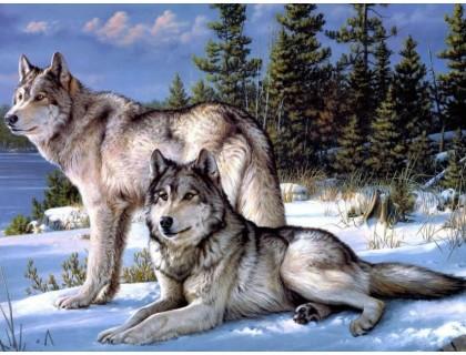 Купить DIY Алмазная вышивка на подрамнике Семейство волков 50 х 40 см (арт. TN558) волки